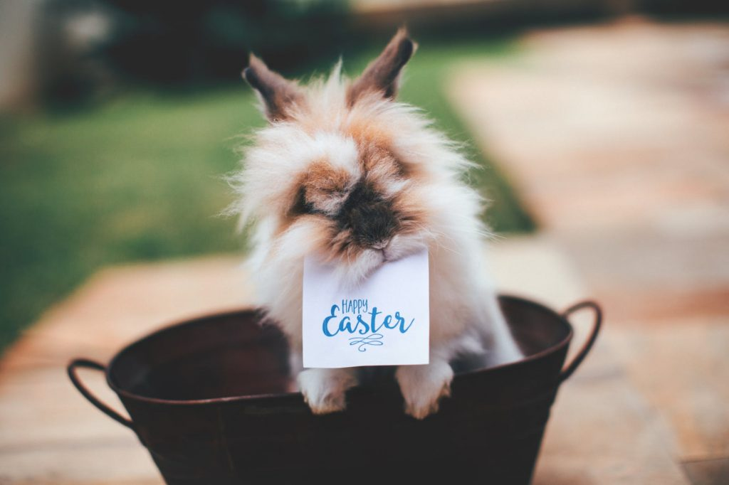 tips dog safe Easter blog