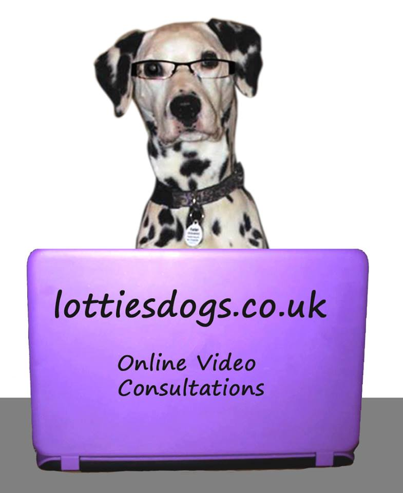 online dog training, remote dog training