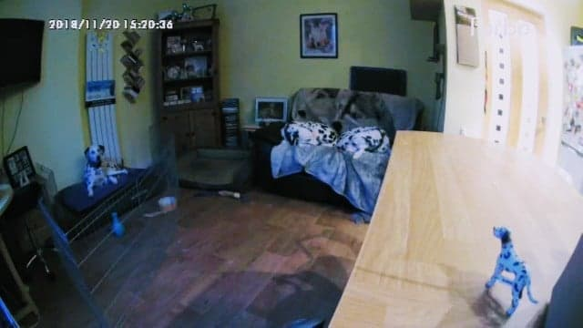 Furbo dog camera image