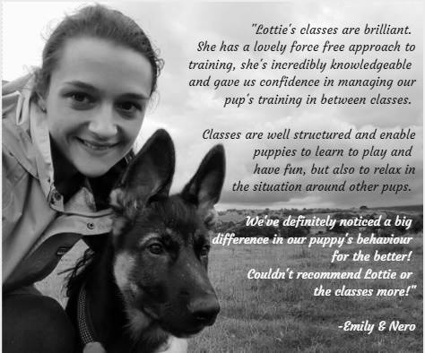 Training Classes Review from Nero the German Shepherd