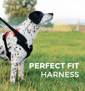 perfect fit harness stockist sheffield